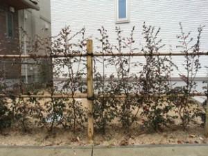 植栽多めのスタイリッシュ外構3